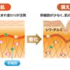 塗るボトックス「シンエイク」と「リンゴ幹細胞」が格安でお試しできる!!