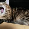 現実逃避!猫やぱさんはブログで迷子になったの 愛する人を探した結果!