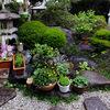 わが家の花たち 〜和風の庭で〜