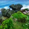 【Archive 1-8】糸満市喜屋武 - ギンネムの林の中でひっそり眠る遺骨