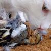 ニュージーランドの村が、ペットの猫の禁止を検討