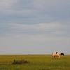 内モンゴルの草原の話