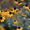 無造作に咲いている花を撮るのが好き