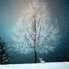 クリスマスに伝えたい!感動するキュートな英語のメッセージはこれだ!