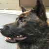 日本犬保存会奈良展、断念する……