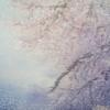 桜の季節も終わって・・