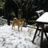 犬は喜び庭駆け回る