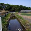 東京 国立 湧水 散歩 9
