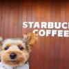 【STARBUCKS COFFEE平田店】ギフトカードをもらったよ💛