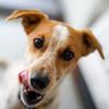 食べるもので犬の性格は変わるのか?
