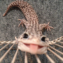 ハチュクリほぼほぼ日誌〜爬虫類飼育×インテリア〜