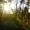 【12月 森の国キャンプ】大山の麓でアスレチック!大人だってはしゃぐ時は必要だ!