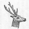 第3章  営林署から 第19話「奥日光のシカ」