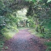 【ウクレレ】(演奏動画あり)久石譲さんの曲が好き過ぎる。ウクレレとジブリの曲は相性バッチリ!