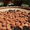 保存食⑯ 梅干しの作り方 毎日1コは食べたい!血液をアルカリに&疲労物質の乳酸を溜まりにくく!