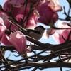 3月の京王フローラルガーデンアンジェに行ってきました その1(マグノリアと花木)