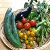 【休日畑】梅雨でもすくすく育つ野菜と子供達。律儀でわるがきの長男。親父の餃子。