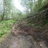 林道の果て