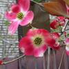 15>今日の庭花 2018,04,11