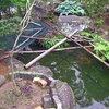 「庭いじりの贅沢」「鯉が鷺に食べられた。」(1)発覚
