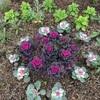 マンション花壇・編み物