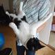 今日の黒猫モモ&白黒猫ナナの動画ー772