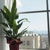 観葉植物と小物の置き方。
