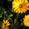 2月13日誕生日の花と花言葉