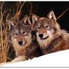 狼のララバイ――ある憑依(ひょうい)の物語  その三