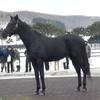 2021年新種牡馬:ポアゾンブラック
