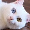爪とぎは猫の本能