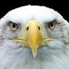 「ハゲる」「髪が薄くなる」「このハゲー!!」を英語で表現するにはどうすればよいのか?