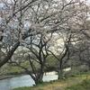 焼津市にあるぴったんCoサークル!春は新しい出逢いの季節。そして新しい事にチャレンジするのにピッタリの季節です♪