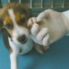 北京のバイオ企業がクローン犬、反倫理的と批判受ける