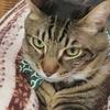 町田の猫カフェ「ねこのみせ」はよかった♡レポート