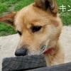 保護犬たちの近況