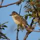 GW河北潟の野鳥②