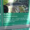2020/3/6 ウグイ