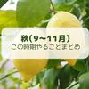 【レモン栽培】秋(9月~11月)にやることまとめ【柑橘類の育て方】