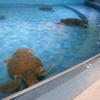 小樽市の冬 - おたる水族館 -