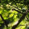 茨城県古河市で写真撮影をしてきた