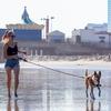 健康と癒しのためにペット・犬との散歩で運動するメリット・デメリット