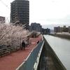 生駒山へ花見ランニング