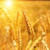 農業次世代人材投資資金の経営開始型を徹底解説