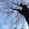 大きな木に心を重ねて