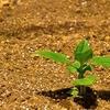 経営品質は畑の土