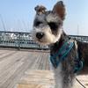 新西宮ヨットハーバーで愛犬と爽やかなお散歩