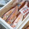 2020年4月4日 小浜漁港 お魚情報