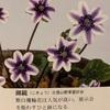 昔の銘花たちの写真