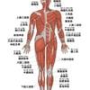 【13日目】腕立て伏せで最初に鍛えられる筋肉は肩の前の部分